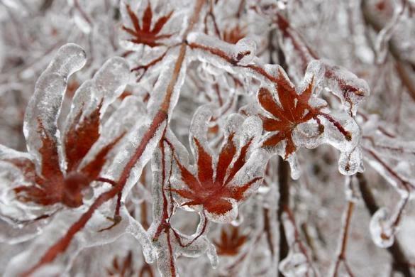 Canada-Toronto-ice-storm